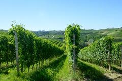 Θερινό τοπίο σε Langhe (Ιταλία) Στοκ Εικόνες
