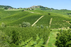 Θερινό τοπίο σε Langhe (Ιταλία) Στοκ Εικόνα
