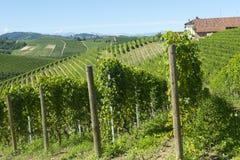 Θερινό τοπίο σε Langhe (Ιταλία) Στοκ φωτογραφία με δικαίωμα ελεύθερης χρήσης