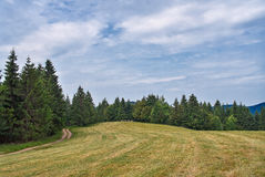 Θερινό τοπίο στα βουνά Vosges Δάσος στην ελαφριά ομίχλη Στοκ εικόνες με δικαίωμα ελεύθερης χρήσης
