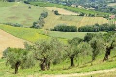 Θερινό τοπίο στην Ουμβρία (Ιταλία) Στοκ Εικόνα