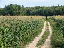 Θερινό τοπίο στην περιοχή Kaluga της Ρωσίας Στοκ Εικόνα