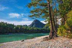 Θερινό τοπίο στον ποταμό Katun Altai, νότια Σιβηρία, RU στοκ φωτογραφία