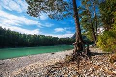 Θερινό τοπίο στον ποταμό Katun Altai, νότια Σιβηρία, RU στοκ φωτογραφία με δικαίωμα ελεύθερης χρήσης