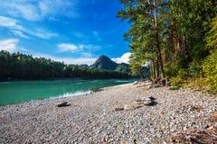 Θερινό τοπίο στον ποταμό Katun Altai, νότια Σιβηρία, RU στοκ εικόνα με δικαίωμα ελεύθερης χρήσης