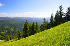 Θερινό τοπίο στο εθνικό πάρκο Bayerische Wald, Γερμανία Στοκ Εικόνες