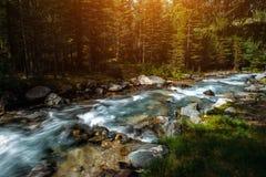 Θερινό τοπίο του ποταμού βουνών μεταξύ των πράσινων δέντρων Ηλιοφώτιστος ποταμός στη δασική εικόνα βουνών της όμορφης φύσης στοκ φωτογραφίες με δικαίωμα ελεύθερης χρήσης