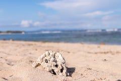 Θερινό τροπικό υπόβαθρο με την άμμο, τη θάλασσα και τον ουρανό Κάρτα καλοκαιριού Τροπικό νησί του Μπαλί, Ινδονησία Στοκ φωτογραφίες με δικαίωμα ελεύθερης χρήσης