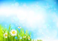 Θερινό υπόβαθρο με τα λουλούδια και τη χλόη ελεύθερη απεικόνιση δικαιώματος