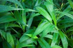 Θερινό υπόβαθρο φύλλων ζουγκλών πράσινο στους εξωτικούς τόνους Στοκ εικόνες με δικαίωμα ελεύθερης χρήσης