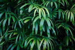 Θερινό υπόβαθρο φύλλων ζουγκλών πράσινο στους εξωτικούς τόνους Στοκ Φωτογραφία