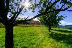 Θερινό φως του ήλιου μέσω των κλάδων appletree Στοκ Εικόνες