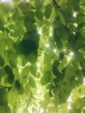 Θερινό φως Στοκ εικόνες με δικαίωμα ελεύθερης χρήσης