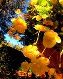 θερινό χρώμα Στοκ Φωτογραφία