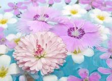 θερινό ύδωρ λουλουδιών στοκ εικόνες