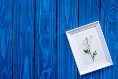 θερινό compisition με camomile τα λουλούδια και πλαίσιο στην μπλε ξύλινη γραφείων χλεύη άποψης υποβάθρου τοπ επάνω Στοκ Εικόνα