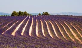 Θερινό lavender τομείς κοντά σε Valensole Στοκ Φωτογραφία