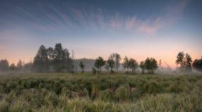 Θερινό misty πρωί Στοκ Εικόνα
