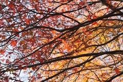 Θερμές κορυφές δέντρων φυλλώματος φθινοπώρου Στοκ Φωτογραφίες