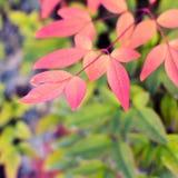 Θερμή πτώση, εποχή φθινοπώρου Φύλλα φθινοπώρου, τετράγωνο για το κοινωνικό netwo στοκ εικόνες