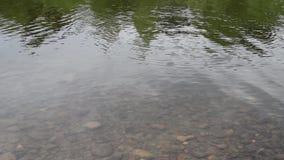 Θερμή σαφής ροή νερών μετά από το χειμώνα υπαίθρια απόθεμα βίντεο