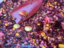 θερμαμένο κρασί φιλμ μικρού μήκους