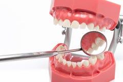 Θερμική μεταβολή διαστάσεων των δοντιών, dentition, καθρέφτης Στοκ Φωτογραφία