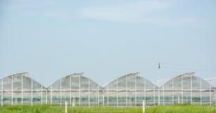 Θερμοκήπια για την ανάπτυξη των λαχανικών στοκ εικόνες με δικαίωμα ελεύθερης χρήσης