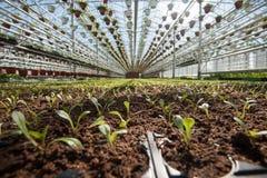 Θερμοκήπιο για την ανάπτυξη των λαχανικών υπό τους ευνοϊκούς όρους Στοκ Φωτογραφία