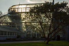 θερμοκήπιο Εθνικοί βοτανικοί κήποι Δουβλίνο Ιρλανδία στοκ φωτογραφία