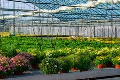 θερμοκήπιο λουλουδιώ&n Στοκ Φωτογραφίες