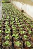 Θερμοκήπιο με τα φυτά Στοκ εικόνα με δικαίωμα ελεύθερης χρήσης