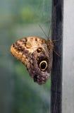 θερμοκήπιο πεταλούδων Στοκ εικόνες με δικαίωμα ελεύθερης χρήσης