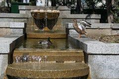 Θερμοκήπιο στη μέση της Μαδρίτης Στοκ φωτογραφία με δικαίωμα ελεύθερης χρήσης
