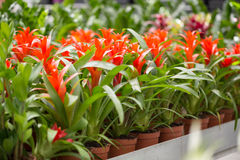 Θερμοκήπιο των λουλουδιών Στοκ φωτογραφία με δικαίωμα ελεύθερης χρήσης