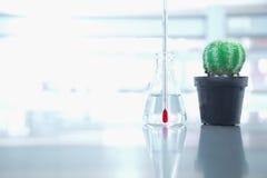 Θερμόμετρο στη φιάλη και πράσινος κάκτος με τη φιάλη για το cha κλίματος στοκ φωτογραφία με δικαίωμα ελεύθερης χρήσης