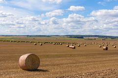 Θερμός Αύγουστος στη Λευκορωσία, στους τομείς των δημητριακών πρέπει ήδη να είναι στοκ εικόνες