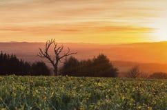 Θερμό ηλιοβασίλεμα πέρα από τους φυσικούς λόφους στο Shropshire στοκ φωτογραφίες με δικαίωμα ελεύθερης χρήσης