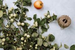 Θερμό φθινόπωρο flatlay με τους κλάδους, τα φρούτα και το σπάγγο μήλων στο γκρι Στοκ Φωτογραφία