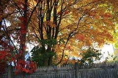 Θερμό φύλλωμα Νέα Αγγλία φθινοπώρου Στοκ Εικόνες