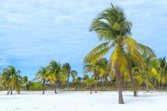 Θεϊκή θέση στη γη, τον ήλιο και την άμμο με τους φοίνικες θαλασσίως Στοκ Φωτογραφία