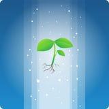 Θεϊκό φυτό Στοκ Φωτογραφίες