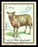 Θηλαστικά, ζώα, εσωτερικά πρόβατα Στοκ φωτογραφία με δικαίωμα ελεύθερης χρήσης