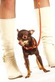 θηλυκά πόδια σκυλιών στοκ φωτογραφία με δικαίωμα ελεύθερης χρήσης