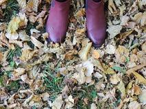 Θηλυκά σκοτεινά ρόδινα παπούτσια στα κίτρινα φύλλα, υπόβαθρο χλόης Στοκ εικόνα με δικαίωμα ελεύθερης χρήσης