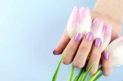 Θηλυκά χέρια με τις πορφυρές τουλίπες λαβής μανικιούρ στοκ φωτογραφία με δικαίωμα ελεύθερης χρήσης