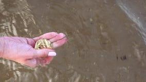 Θηλυκά χέρια που παίρνουν χρυσά bitcoin από το νερό απόθεμα βίντεο