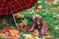 Θηλυκές λαστιχένιες μπότες με τα φύλλα σφενδάμου πτώσης στη χλόη Στοκ Φωτογραφία