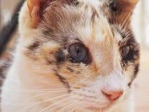Θηλυκή γάτα στοκ εικόνα με δικαίωμα ελεύθερης χρήσης