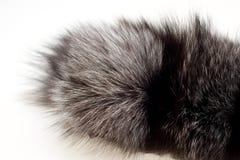 θηλυκή γούνα αλεπούδων π&e Στοκ φωτογραφίες με δικαίωμα ελεύθερης χρήσης